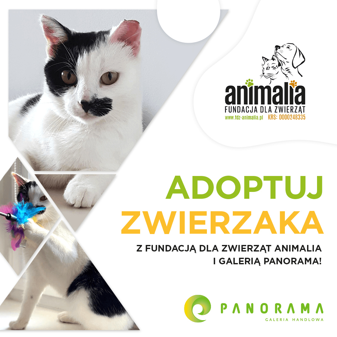 J051 Panorama Animalia Adoptuj 2021_1080x1080 Julka
